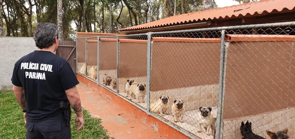 Projeto de lei pretende proibir venda de animais domésticos em pet shops e veterinárias